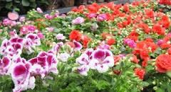 bloemetjes 1