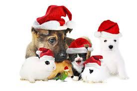 kerstdieren