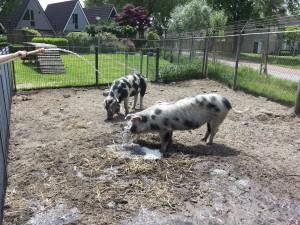 047 14-06-2015 Boxtel - kinderboerderij - Ollie en Mollie