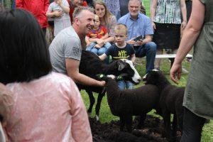 schapen scheren 2019 051